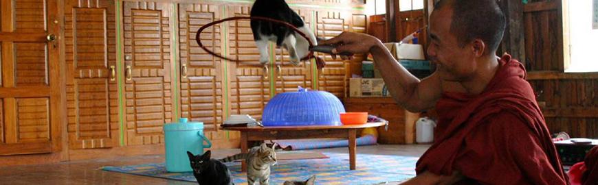 chats sauteurs